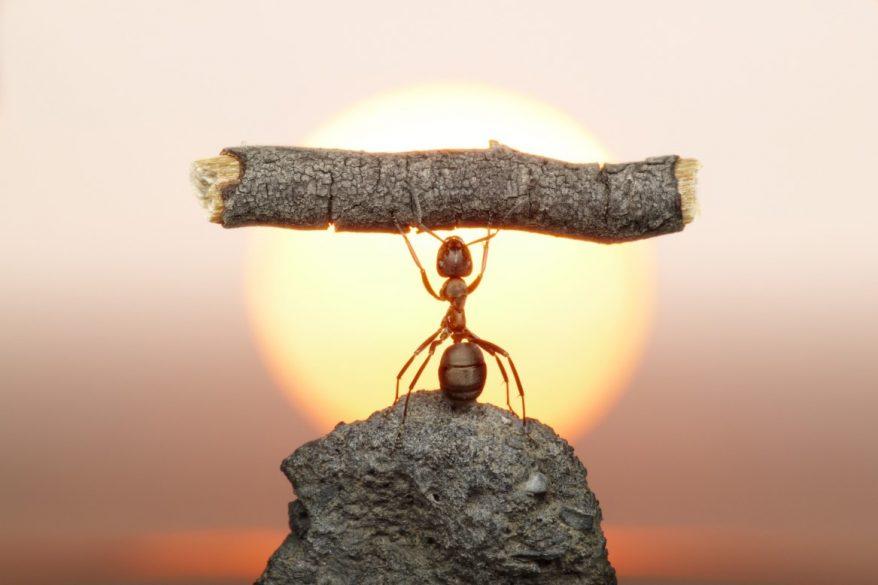 「働きアリの法則」に見る仕事の進め方の改善策 できる…